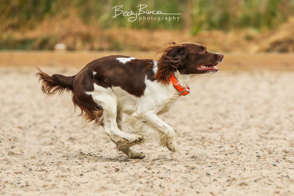 Jazzy running2