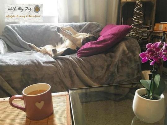 jazzy-sofa-stretch.jpg